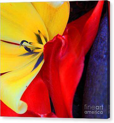Color Kiss Canvas Print by Jeanette French
