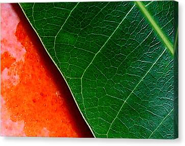 Color Me Mango Sweet And Spicy Canvas Print by James Temple