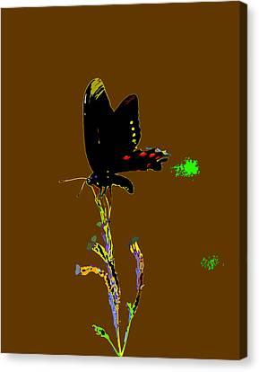 Canvas Print - Color Me Pretty by Kim Pate