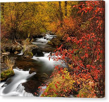 Color Of Autumn Canvas Print by Leland D Howard