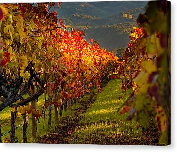 Grape Vines Canvas Print - Color On The Vine by Bill Gallagher