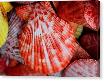 Color Shells Canvas Print By Julia Fine Art And Photography