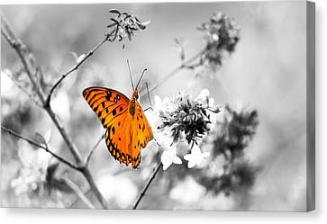 Color Splash Canvas Print by Shelby  Young