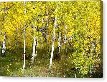 Colorado Autumn Canvas Print