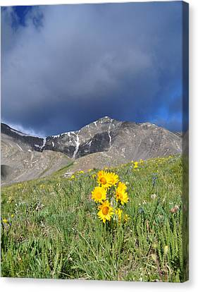 Colorado Beauty Canvas Print by Aaron Spong