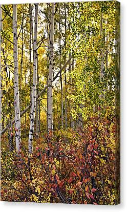 Canvas Print featuring the photograph Colorado Changing Eight    by Eric Rundle