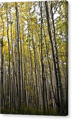 Canvas Print featuring the photograph Colorado Changing Fifteen  by Eric Rundle