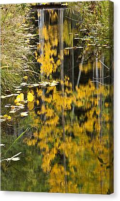 Canvas Print featuring the photograph Colorado Changing Five  by Eric Rundle