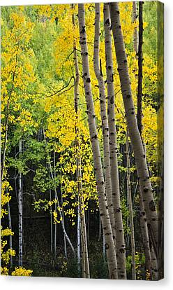 Canvas Print featuring the photograph Colorado Changing Two  by Eric Rundle