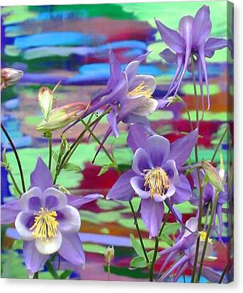 Colorado Columbine Canvas Print by Brenda Pressnall