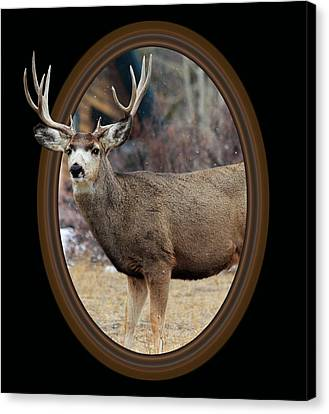 Colorado Muley Canvas Print by Shane Bechler