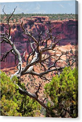 Colorado National Monument Dead Branches Canvas Print by Christopher Arndt