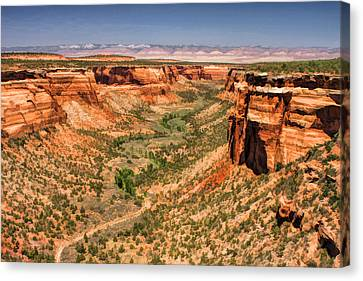 Colorado National Monument Ute Canyon Canvas Print by Christopher Arndt