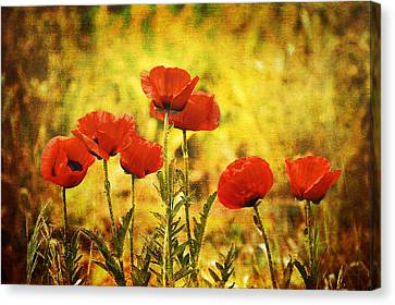 Canvas Print featuring the photograph Colorado Poppies by Tammy Wetzel