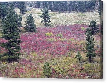 Colorado Red Canvas Print