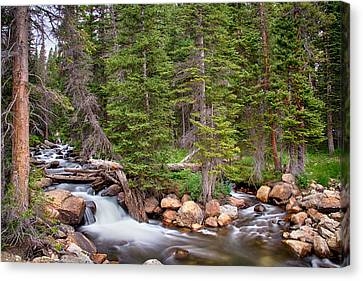 Colorado Rocky Mountain Forest Stream Canvas Print