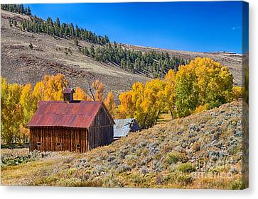 Colorado Rustic Rural Barn With Autumn Colors  Canvas Print by James BO  Insogna