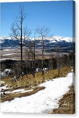 Colorado Trail 1 Canvas Print by Claudette Bujold-Poirier