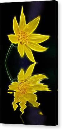 Colorado Wildflower Canvas Print by Shane Bechler