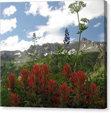 Canvas Print - Colorado Wildflowers by Robert Lozen