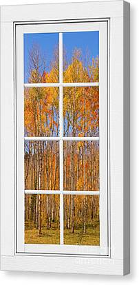 Colorful Aspen Tree View White Window Canvas Print by James BO  Insogna