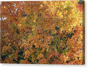 Colorful Autumn Canvas Print by Laura Watts