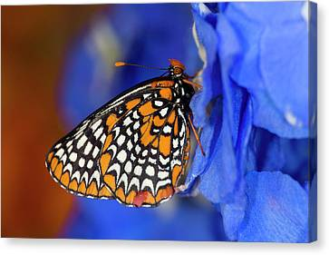 Colorful Baltimore Checkered Spot Canvas Print by Darrell Gulin