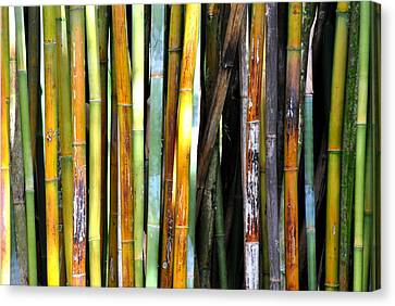Canvas Print featuring the photograph Colorful Bamboo by Jodi Terracina
