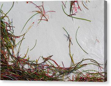 Canvas Print featuring the photograph Colorful Beach Grass by Jeanne Forsythe