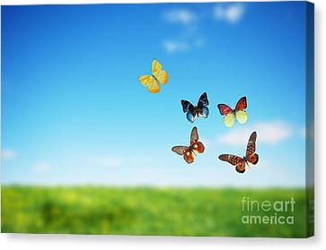 Colorful Buttefly Spring Field Canvas Print by Michal Bednarek