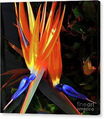 Canvas Print featuring the photograph Colorful California Morning by Clayton Bruster