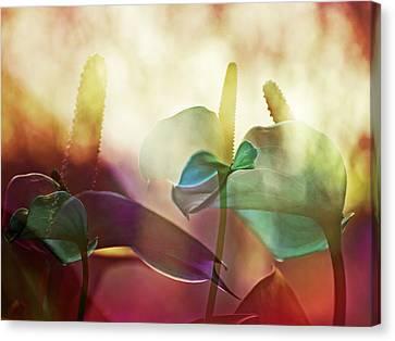 Colorful Calla Canvas Print by Eiwy Ahlund
