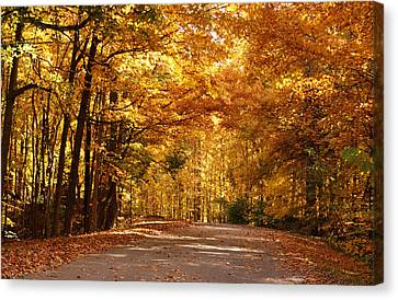 Colorful Canopy Canvas Print by Sandy Keeton