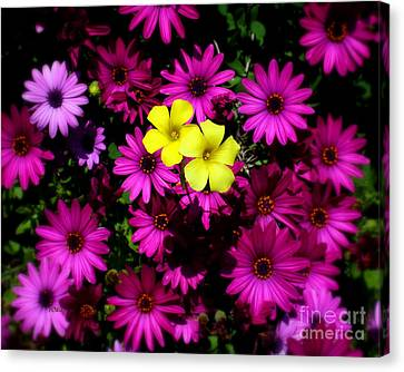 Colorful Contrast Canvas Print by Patrick Witz
