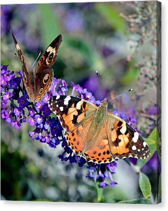 Colorful Cousins Canvas Print by Deena Stoddard