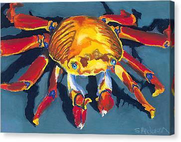 Colorful Crab Canvas Print by Stephen Anderson