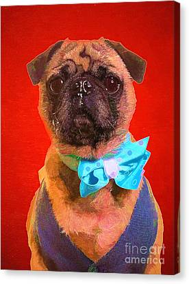 Colorful Dapper Pug Canvas Print by Edward Fielding