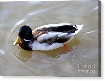Colorful Duck Canvas Print