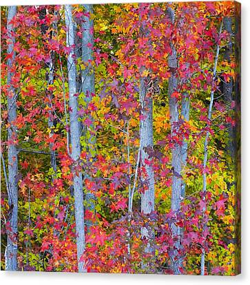 Colorful Fall Leaves Canvas Print by Scott Cameron