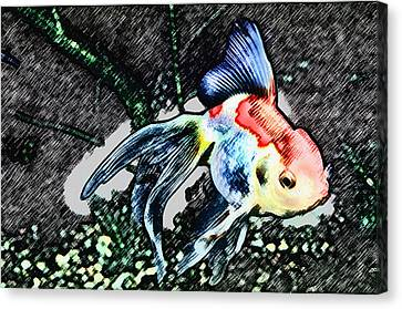 Colorful Fantail Goldfish Canvas Print by Wernher Krutein