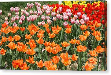 Colorful Flower Bed Canvas Print by John Telfer