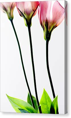 Colorful Flower Canvas Print by Sarit Saliman