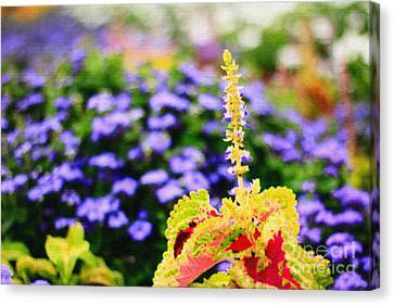 Colorful Garden Scene Canvas Print by Beverly Claire Kaiya