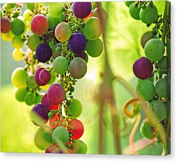 Concord Grapes Canvas Print - Colorful Grapes by Peggy Collins