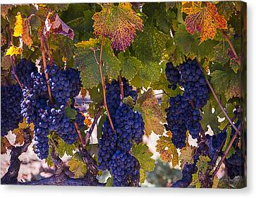 Colorful Harvest Canvas Print by Garry Gay