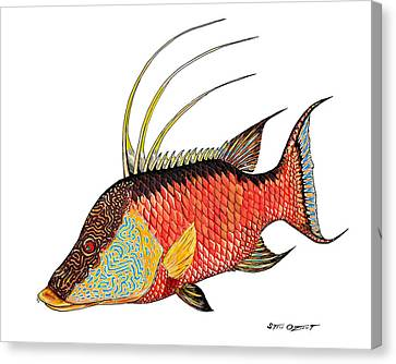 Colorful Hogfish Canvas Print