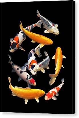 Colorful Japanese Koi Vertical Canvas Print
