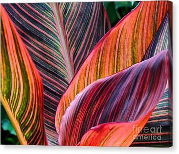 Colorful Leaves Canvas Print by Eve Spring