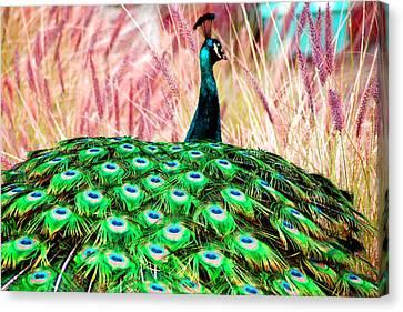 Colorful Peacock Canvas Print by Matt Harang