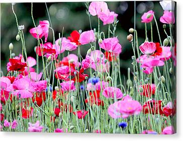 Canvas Print featuring the photograph Colorful Poppies by Peggy Collins